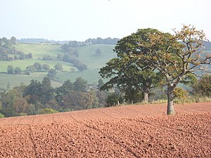 English: The rich red earth of Herefordshire T...