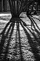 The shadow is longer than the self (8777685056).jpg