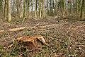 Theberton Woods - geograph.org.uk - 361070.jpg