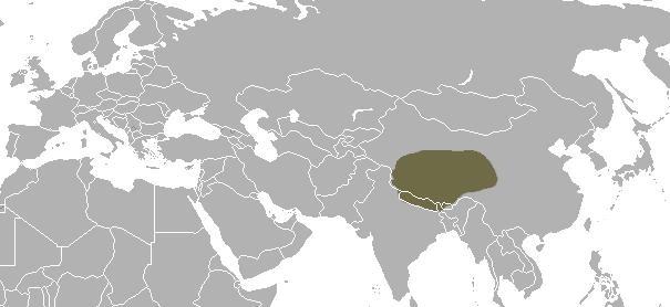Tibetan Fox area