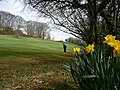 Tiverton Golf Club , The 3rd Hole and Daffodils - geograph.org.uk - 1228342.jpg