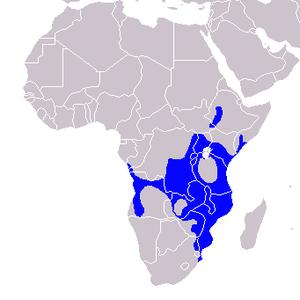 Crowned hornbill - Image: Tockus alboterminatus Distribution