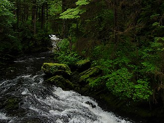 Tongass National Forest - A stream in the forest