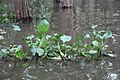 Tonle Sap Lake (9731665706).jpg