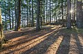 Top of Baynes Peak, Saltspring Island, British Columbia, Canada 06.jpg