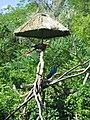 Toronto Zoo IMG 1085 (194431162).jpg