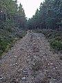 Track, Duthil Plantation - geograph.org.uk - 749297.jpg