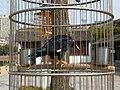Treasure Boat Shipyard - mynah bird - P1070975.JPG