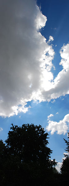 File:Trees against blue sky with clouds.jpg
