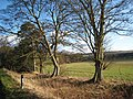 Trees on Broadwood Lane - geograph.org.uk - 358754.jpg