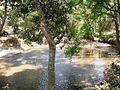 Trekking @ Wayanad wildlife Sanctuary - panoramio (10).jpg