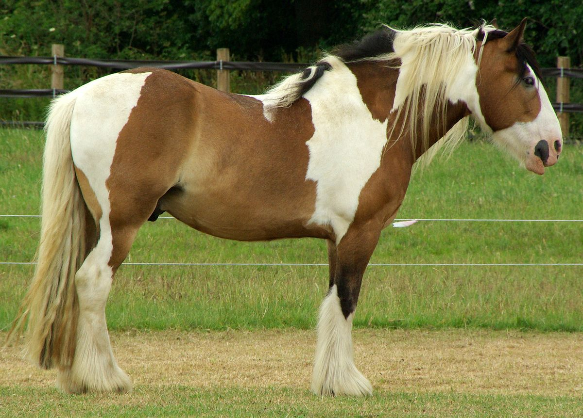 Red Dun Paint Horse