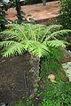 Tropical Blechmum & America (1) (11981993705).jpg