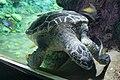 Turtle Reef (8793383033).jpg