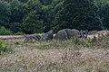 Tustrup gravpladsen (Norddjurs Kommune).Fritstående dyssekammer.7.47887.ajb.jpg