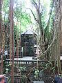 Ubud Monkey Forest 8.JPG