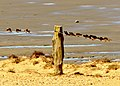 Uferschwalben kühlen sich am Morsum-Kliff.jpg