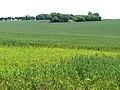 Undulating farmland east of Holy Cross Church - geograph.org.uk - 1352073.jpg