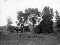 Ute wickiup