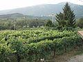 Valdobbiadene - San Giovanni5.jpg