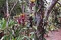 Vanilla plantation, Mucaweng, Lifou, New Caledonia, 2007 (4).JPG