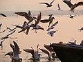 Varanasi (21) (45523450805).jpg
