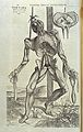 Vesalius, De humani corporis fabrica, 1543 Wellcome L0031739.jpg