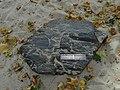 Vestec, Kamenný had, břidličný rohovec z Chomutovic 2.jpg