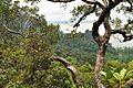 View from Loop trail - Bako National Park - Sarawak - Borneo - Malaysia - panoramio.jpg