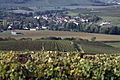 Vigne Chardonnay (Festigny) Cl.J.Weber05 (23677687905).jpg