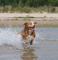 Viljo koirarannalla 11.jpg
