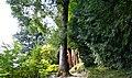 Villa Carlotta - Orto botanico.jpg