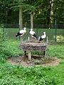 Vogelpark-Schifferstadt-02.JPG