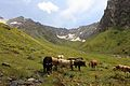 Vysokohorské louky pod ledovcem Murkvami - panoramio.jpg