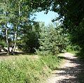 Waldweg - panoramio (33).jpg