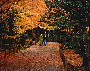 Leaf peeping - Momiji at Ryōan-ji in Kyoto