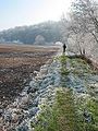 Walking on a frosty morning - geograph.org.uk - 693833.jpg