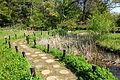 Walkway - Institute for Nature Study, Tokyo - DSC02133.JPG
