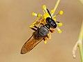 Wasp August 2007-13.jpg