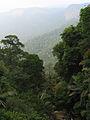 Western Ghats Vegetation - View en route Kottiyoor to Mananthavady10.jpg