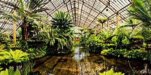 Garfield Park Conservatory - inside the conservatory