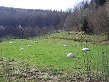Ill (Francia) - Wikipedia
