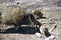 Wildschwein mit zwei Jungtieren.jpg