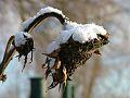 Winter in Buschmähns Welt.jpg