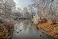 Winterzauber im Kur- und Schlosspark Bad Mergentheim. 02.jpg