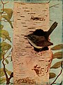 Wisconsin bird-study bulletin (1906) (14747539014).jpg