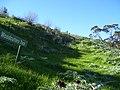 Woodcutters track - panoramio.jpg