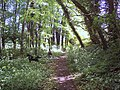 Woodland bridleway near Minchington - geograph.org.uk - 441707.jpg