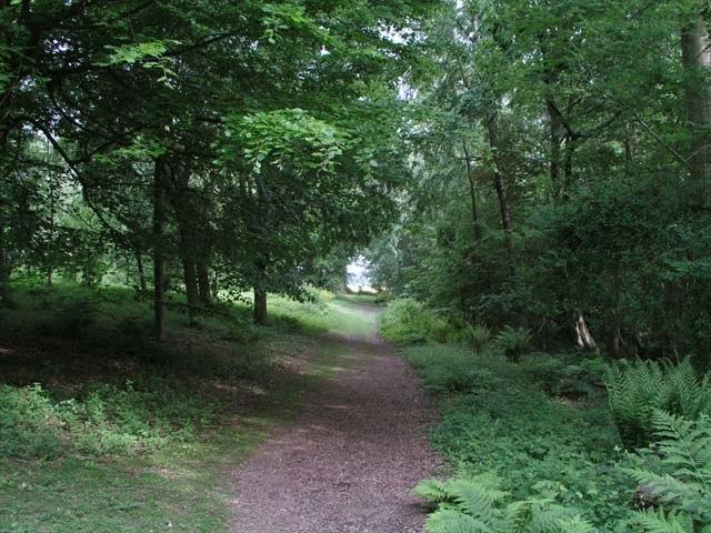 Woodland walk at Nymans - geograph.org.uk - 440123