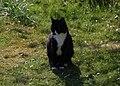 Wraxall 2012 MMB 13 Smudge.jpg